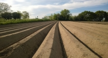 Symetrie auf dem Feld. (1)
