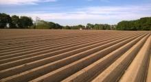 Symetrie auf dem Feld. (2)