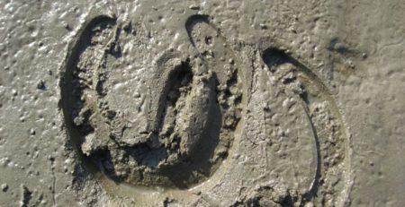Bild zeigt ein Hufeisenabdruck im Sand