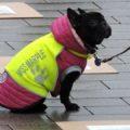 Hund mit gelber Weste